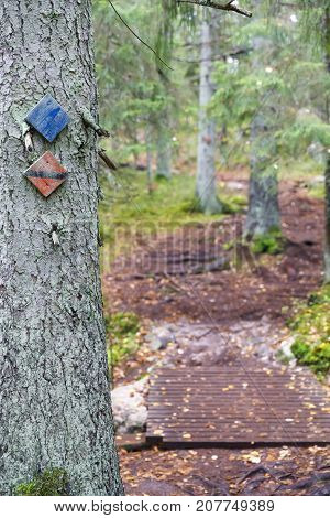 Signs on a tree marking hiking track in forest