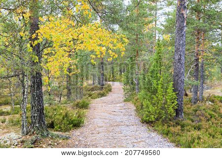 Long footpath through colorful forest in autumn