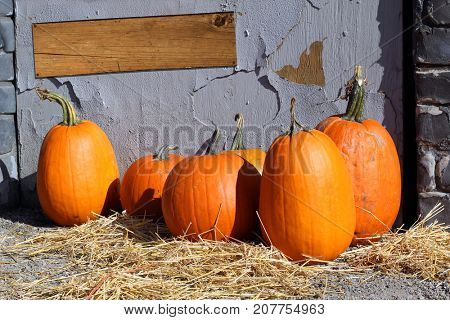 Halloween pumpkin patch with blank wooden sign. Add your own text.