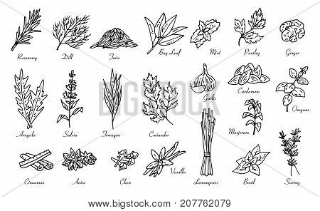 kitchen herbs and spices, vector doodle sketch set