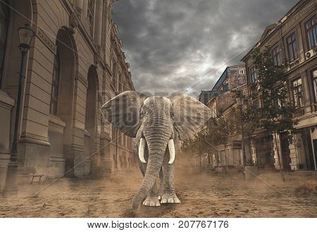 Elephant brings nature to the city. Elephant walks in town.