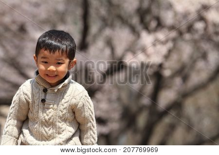 Japanese Boy And Cherry Blossoms (3 Years Old)