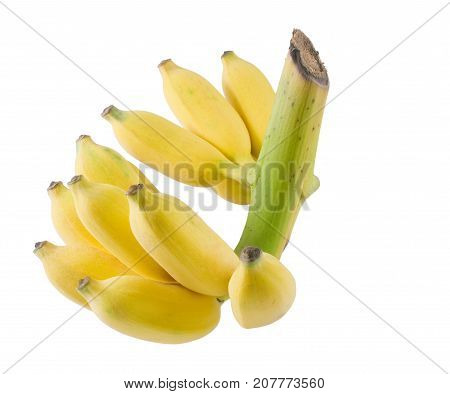 Fruits A Bunch of Ripe Yellow Wild Asian Bananas or Cultivated Banana Isolated on White Background.