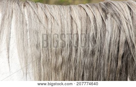 mane of a white horse . Photo of abstract background