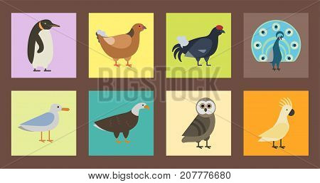Bird species collection different vector illustration wild, animal characters cute fauna tropical feather pets. Pigeon dove eagle owl sparrow flamingo pheasant parrot toucan avifauna