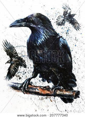 corbie, watercolor, bird, animals, wildlife, black, predator