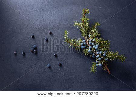Juniper branch with fresh berries