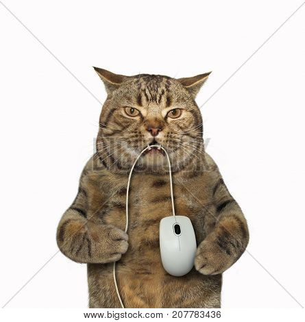 The big cat is holding a computer mouse in its teeth. White background.