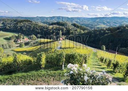 Famous Heart shaped wine road in Slovenia in autumn, Heart form - Herzerl Strasse, vineyards in autumn, Spicnik poster