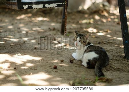 Black And White Cat Laying Down On Ground