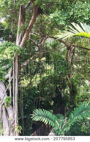 View from a high place to see walk way through the tropical rain forest.