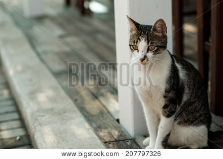 Street Cat Is Sitting On The Ground