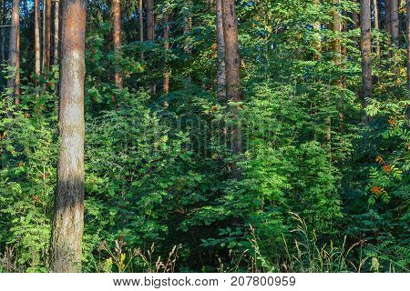 Forest thickets. A tourist itinerary for experienced travelers. Russia