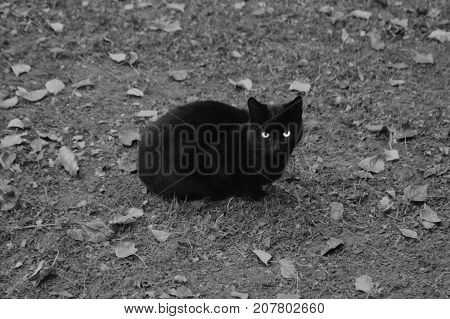 Cat on the ground. Kitty looking. Animal