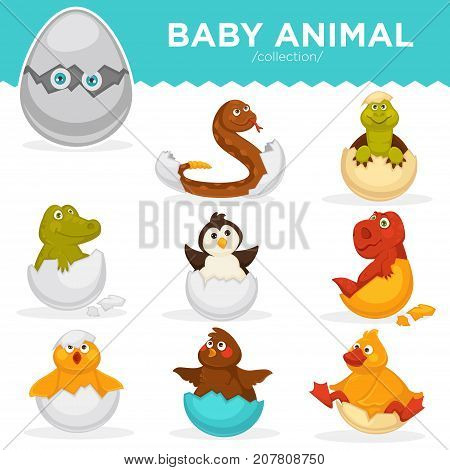 Baby animals hatch eggs or cartoon pets hatching. Vector flat isolated funny toy icons rattle snake, crocodile and dinosaur baby, chick or duck bird and penguin. Kid animal characters set