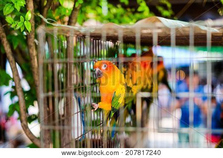 Colorful parrot in steel cage for animal background or texture - Pet concept.