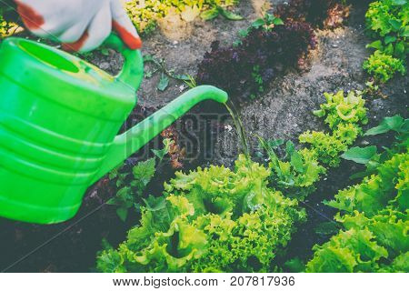 Cultivation of vegetables care of the beds