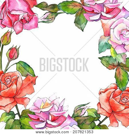 Wildflower rose flower frame in a watercolor style. Full name of the plant: rose. Aquarelle wild flower for background, texture, wrapper pattern, frame or border.