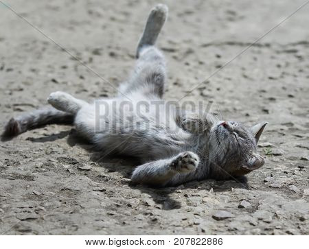 sweet tabby cat playfully lying and enjoying the sun funny legs spread wide