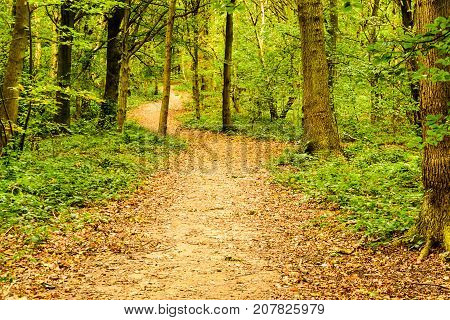 A Path in the woods in the autumm leading into thew future and the way ahead.