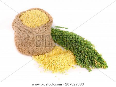 Millet in a bag with green spikelets isolated on white background.