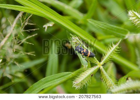 Strange larva of bug. Strange creature in nature.