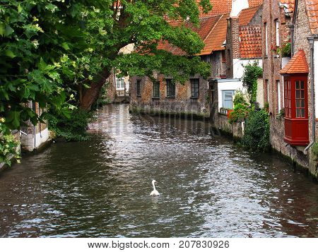 Lone swan swimming through waterway in Bruges, Belgium with Red Brick Buildings and Trees lining Canal.