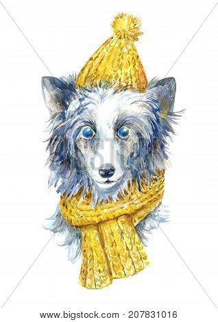 Chinese crested in winter hat and scarf portrait.Greeting card of a dog.Domestic pet.Watercolor hand drawn illustration.White background.
