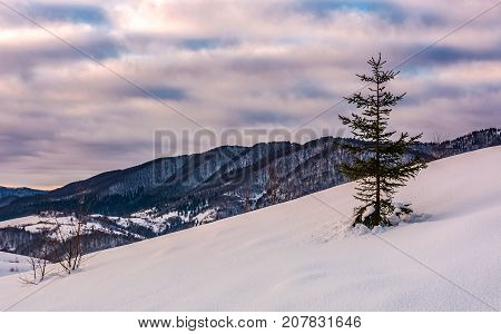 Lonely Spruce Tree On Snow Covered Slope