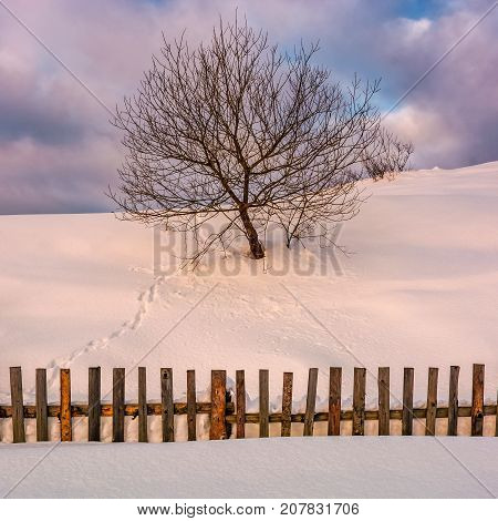 Lonely  Tree On Snowy Hillside Behind The Fence