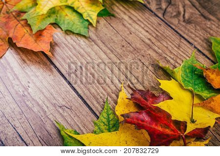 Autumn background with colorful fall maple leaves on rustic wooden table. Life cycle of fall leaf. Thanksgiving holidays concept. Green, yellow and red autumn leaves. Selective focus.