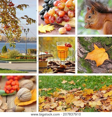 Beautiful Autumn Collage