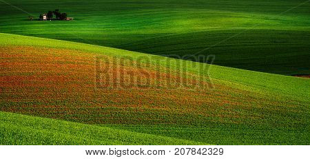 Rural landscape with green field and wooden hunting shack , South Moravia, Czech Republic