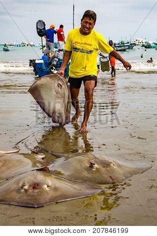 Fisherman Hauls Flounders Onto Beach