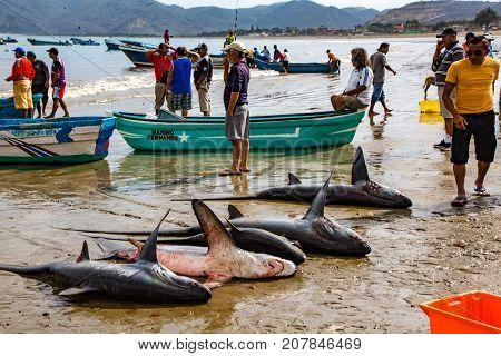 Line Of Freshly Caught Shark On Beach