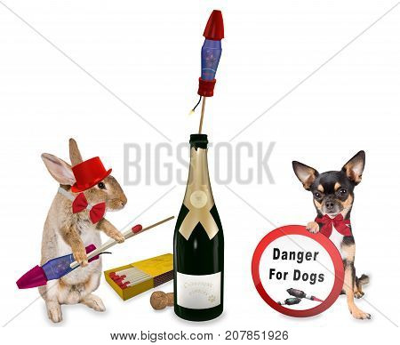 Cute dog chihuahua have forbidden sig board between legs for fireworks rockets with bunny