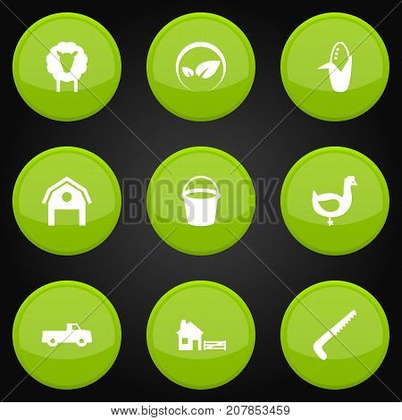 Collection Of Maize, Ecology, Hen And Other Elements.  Set Of 9 Agricultural Icons Set.