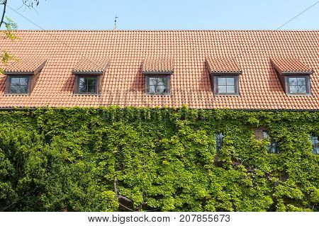 Old Red ceramic Shingles Roof with attic Windows and wall with greenery or grape hederacea.