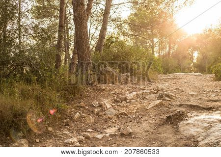 Quiet Trail Through A Pine Grove In Spain At Sunset