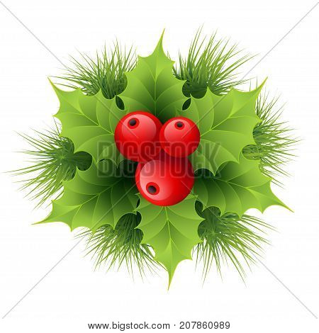 Vector realistic holly and fir tree branches Christmas ornament. Holly green leaves and red berries isolated on white background.