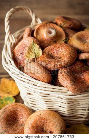Lactarius Deliciosus, Commonly Known As The Saffron Milk Cap And Red Pine Mushroom In Wicker Basket