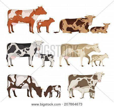 Vector cow and calf collection isolated on white for farms groceries packaging and branding