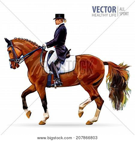 Equestrian sport. Horsewoman jockey in uniform riding horse outdoors. Dressage. Isolated on white background. Jockey on horse. Vector illustration