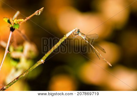 Dragonfly resting on a small tree branch with a blurry background