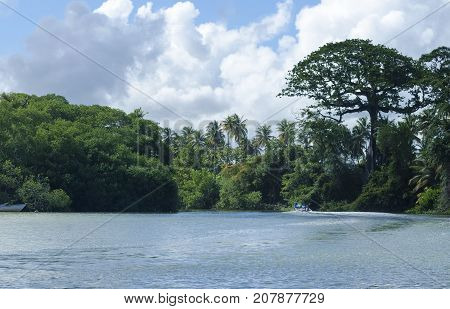 Going up the Nariva River on the east coast of Trinidad on a sunny day.