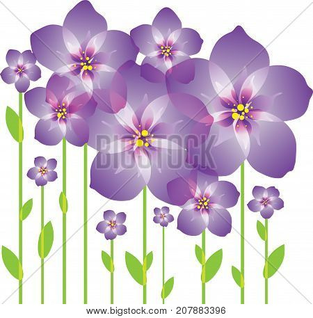 Abstract bouquet purple blooming flowers on white background