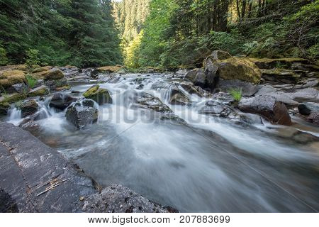 Pine Trees Line A Rushing River