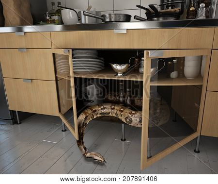 the snake hid in the kitchen cupboard. Photo and media mix