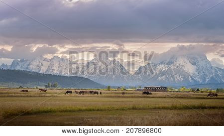 Sunset on ranch with horses jumping next to the Grand Teton National Park