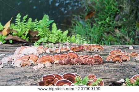 Close Up Shot Of Mushroom On Timber Wood